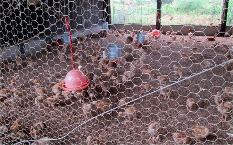 OURO PRETO DO OESTE: Município ganha agroindústria para abate de frangos