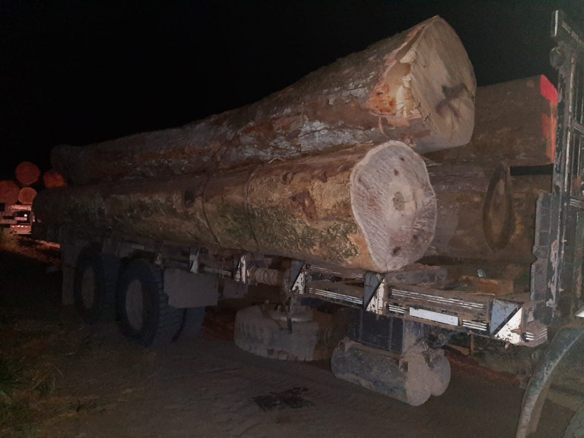 FURTO: Homens são presos transportando madeira ilegalmente