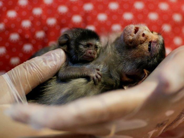 IMPRENSA INTERNACIONAL: Fotos mostram sofrimento de animais por conta de queimadas em Porto Velho