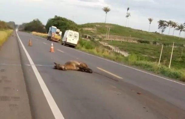 TRAGÉDIA: Pacientes que iam fazer hemodiálise morrem após carro bater em cavalo na BR